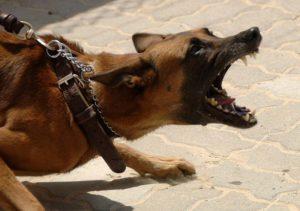 Neill Trial Law - dog bite attorney